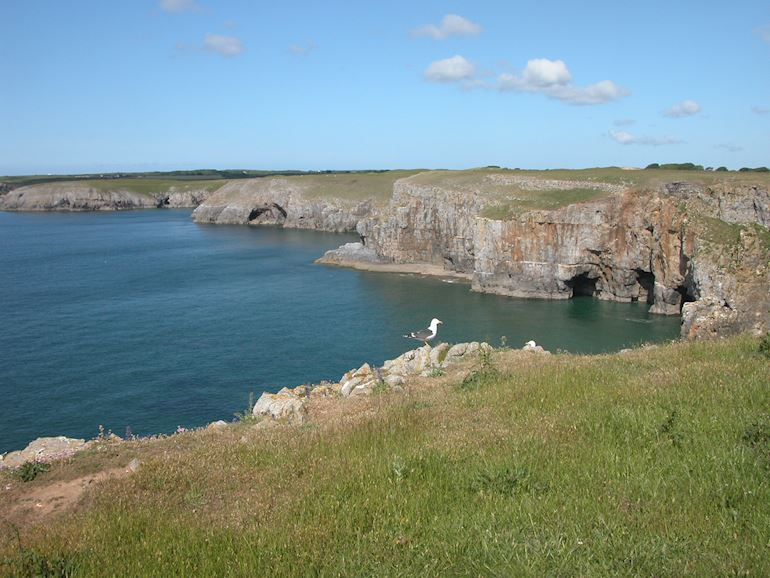 View of Stackpole Coast between Mowingoword Saddle Point